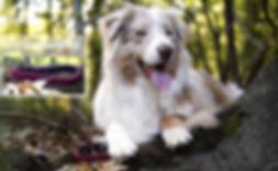 CraftCreation for Pets - Collier/Laisse Paracorde