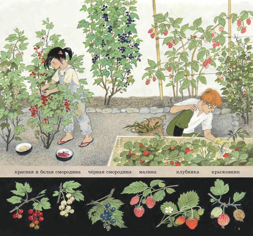 Герда Мюллер: Как растут ягоды, орехи и фрукты?