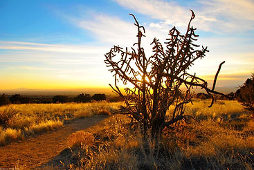 th_Cactus by Matt Toplikar.jpg