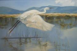 Wattle Crane