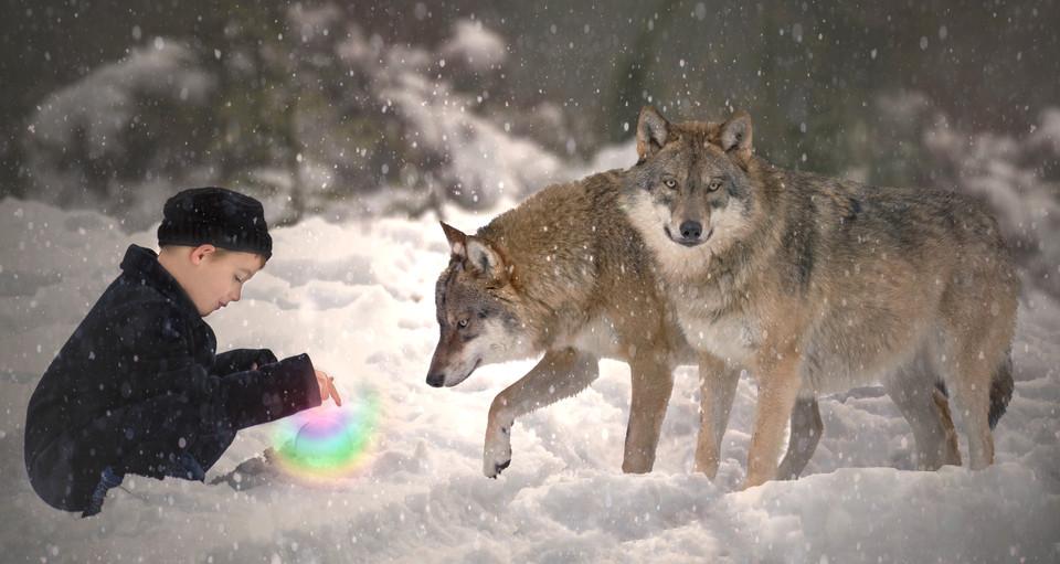 wolfsat2.jpg