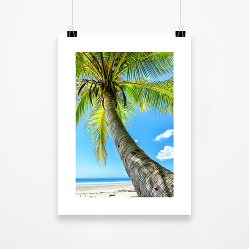 Daintree Palm