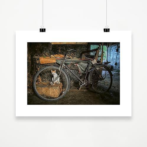 El gato y la rueda