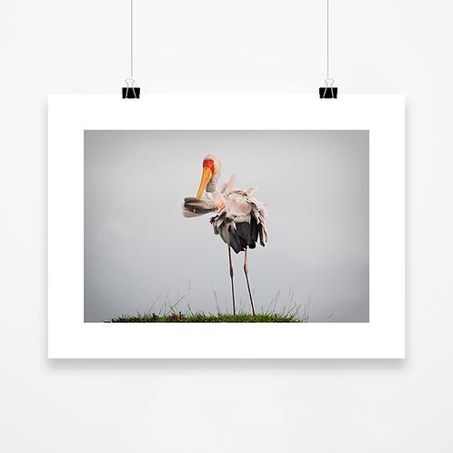 Kazinga Stork