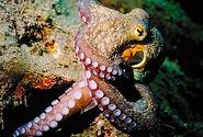 ScubaGozo Xlendi PADI5* Utina Diving