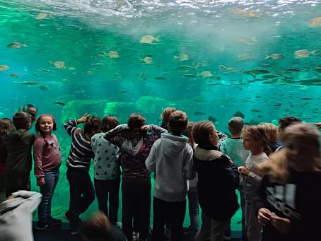 Les 3e et 4e A vivent des moments exceptionnels en classes de mer !