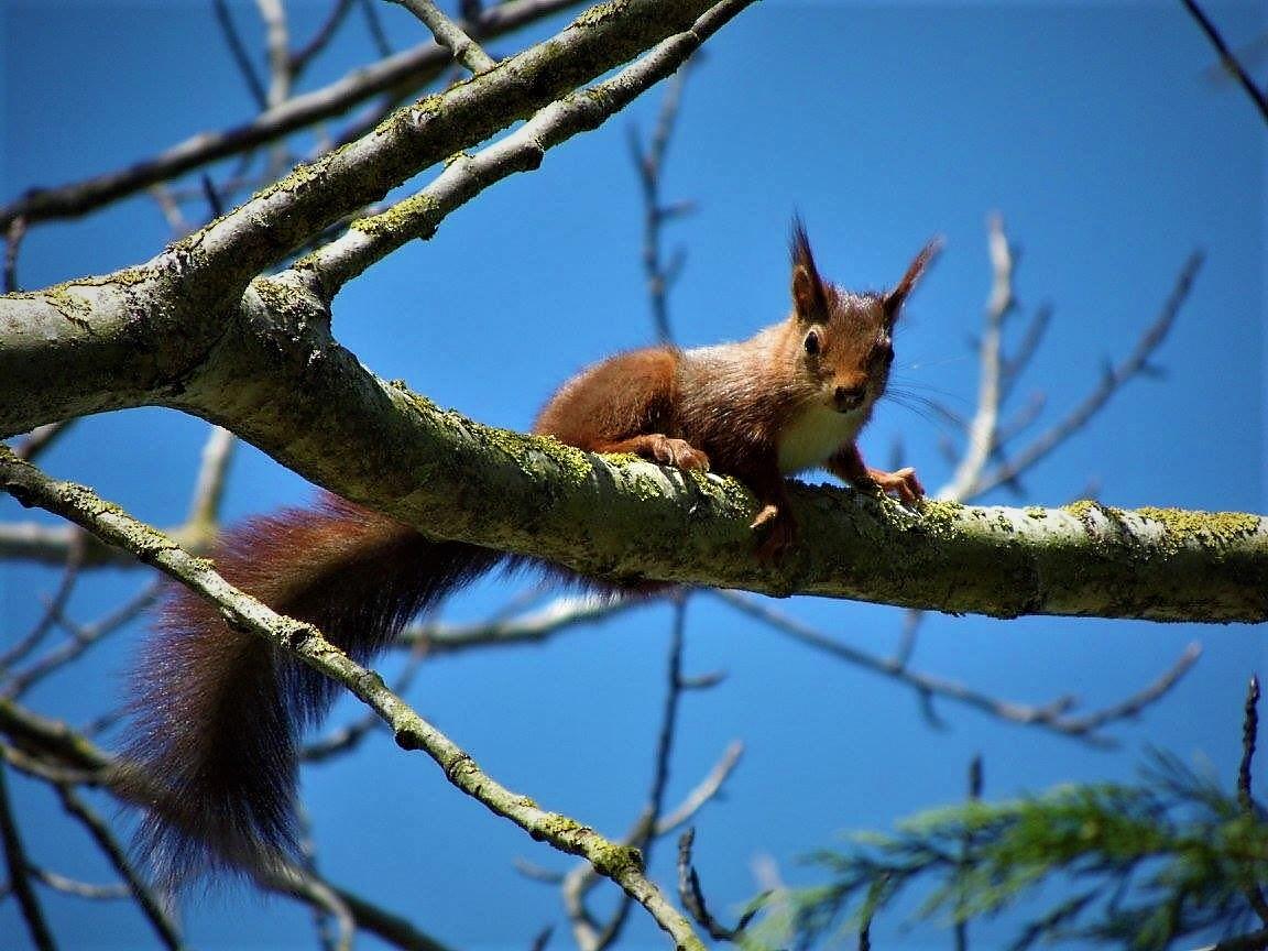Notre écureuil aux Etangs de l'Abbay