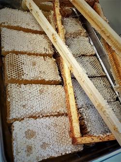 Les ruches des Etangs de l'Abbayes