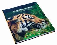 Majestic Stripes: The Malayan Tiger
