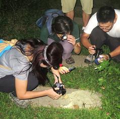 台北-自然觀察和美山夜觀推廣.jpg