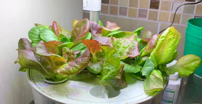 Have a Green Thumb in Minutes!