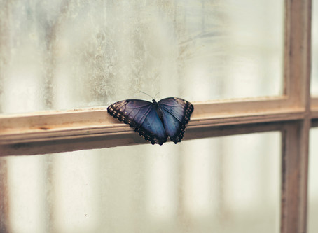 from dragonfly to butterfly