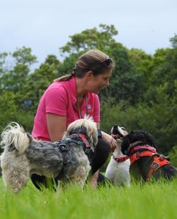 Lets Walk Dogs - Taunton dog walker 67