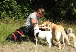 Lets Walk Dogs - Taunton dog walker 140.