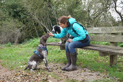 Professional dog walker sat on a bench with 2 dogs on the Taunton & Bridgwater canal