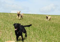 Lets Walk Dogs - Taunton dog walker 106.