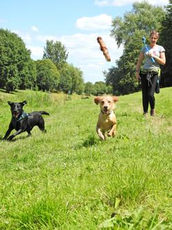 Lets Walk Dogs - Taunton dog walker 60