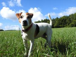Lets Walk Dogs - Taunton dog walker 121.