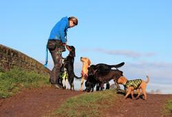 Group dog walks in Taunton