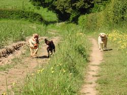 Lets Walk Dogs - Taunton dog walker 134.