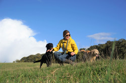 Lets Walk Dogs - Taunton dog walker 79a.