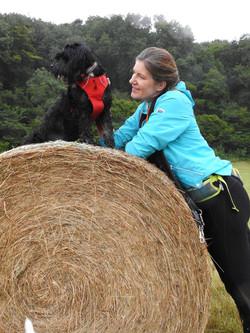 Dog walker in Taunton with a black Tibetan Terrier sat on hay bale