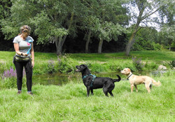 Lets Walk Dogs - Taunton dog walker 105.