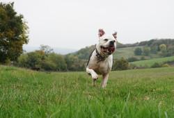 Lets Walk Dogs - Taunton dog walker 58