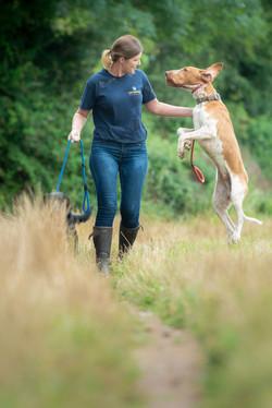 Lets Walk Dogs - Taunton dog walker 98