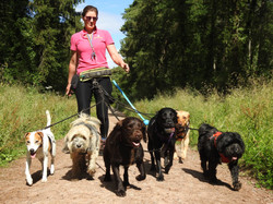Dog walker from Taunton training her dogs to walk on lead