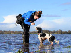 Local dog walker in Taunton with spaniel