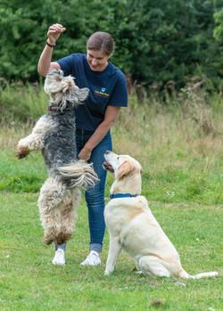 Lets Walk Dogs - Taunton dog walker 117.