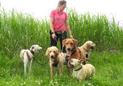 Group dog walking in Taunton Somerset