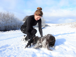 Taunton Dog walker playing with dog in the snow