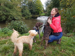 Dogs enjoying their day care in Taunton