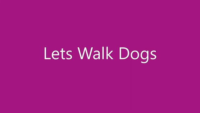 Taunton Dog Walker - My first year