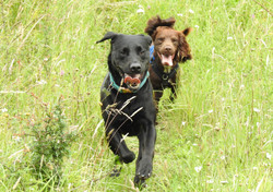 Lets Walk Dogs - Taunton dog walker 118.