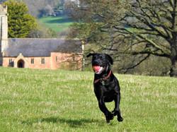 Lets Walk Dogs - Taunton dog walking