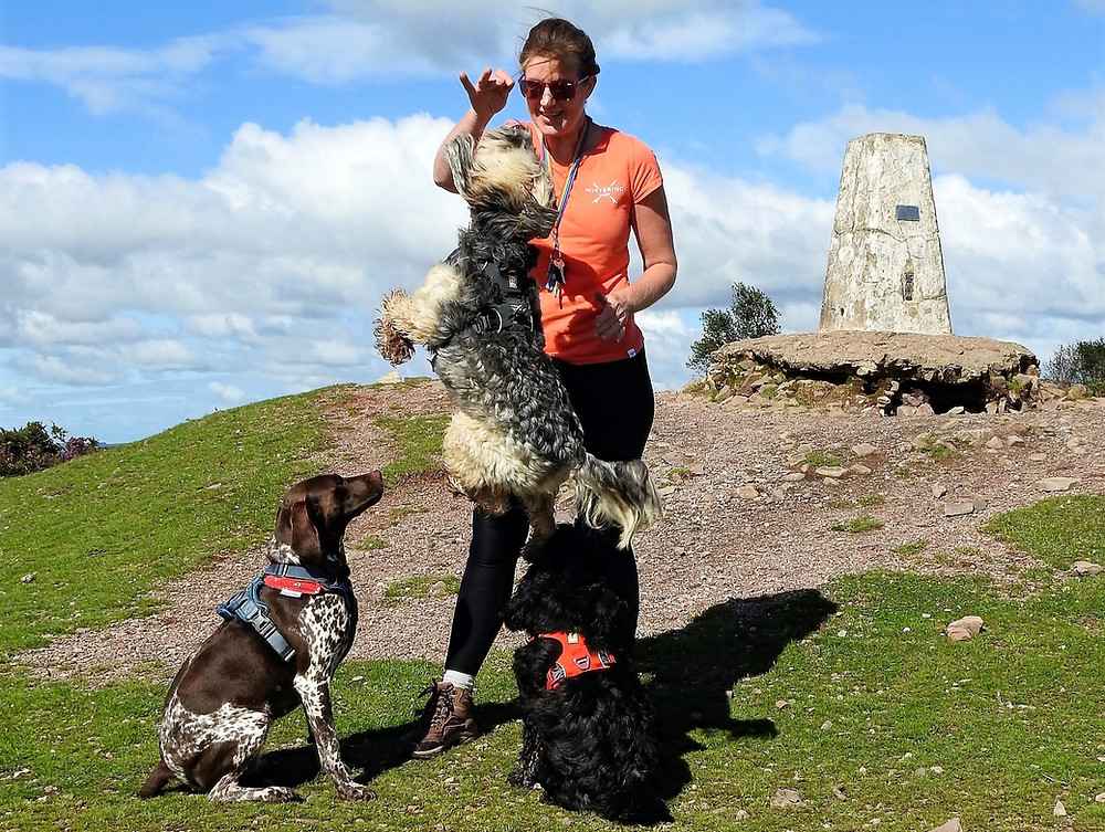 Group dog walker in Taunton