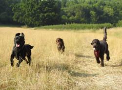 Lets Walk Dogs - Taunton dog walker 81