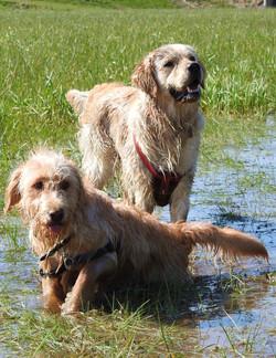 Lets Walk Dogs - Taunton dog walker 120.