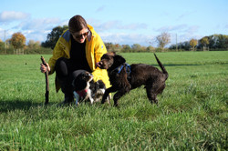 Lets Walk Dogs - Taunton dog walker 100.
