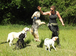Group dog walk in Monkton Heathfield, Taunton.