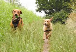 Lets Walk Dogs - Taunton dog walker 91