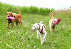 Lets Walk Dogs - Taunton dog walker 39