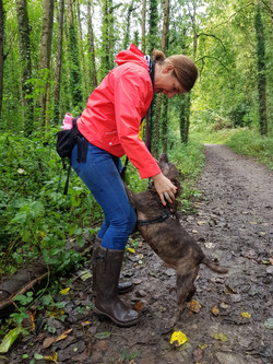 Taunton dog walking with a Staffie in the woods