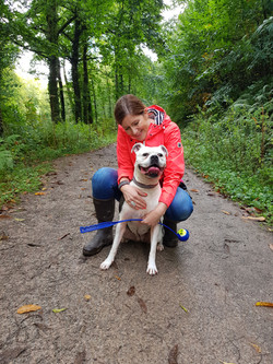 Dog walking in Taunton with an American Bulldog at Thurlbear Woods