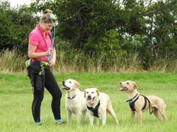 Lets Walk Dogs - Taunton dog walker 97