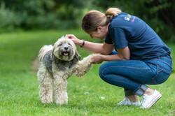 Lets Walk Dogs - Taunton dog walker 95