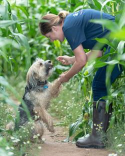 Lets Walk Dogs - Taunton dog walker 82